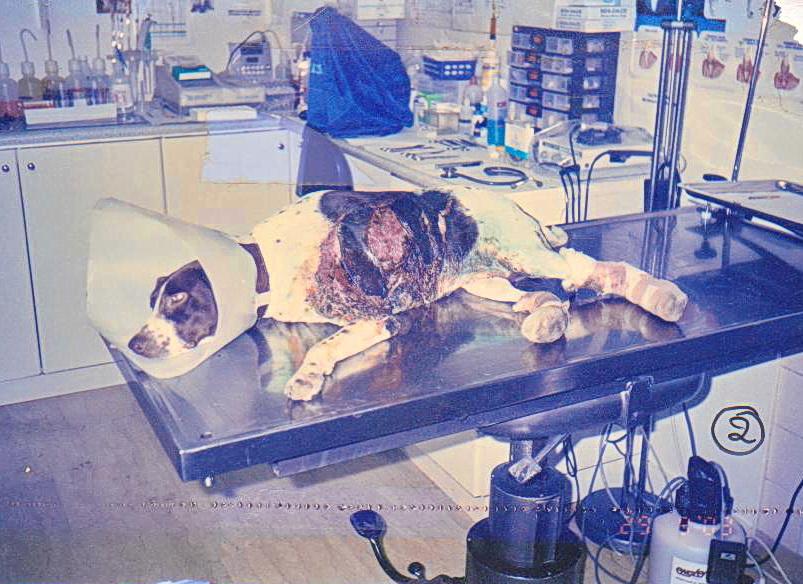 εγκαυμα σκυλου θεραπεια