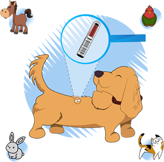 Σημανση - τοποθετηση microchip σκυλου