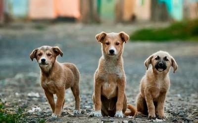 Ημιαιμα Αδεσποτα σκυλια