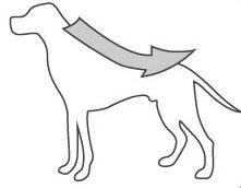 τοποθετηση της αμπουλας - πιπετας σε σκυλο γατα