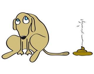 διαρροια σκυλου