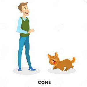 """Εκπαιδευση σκυλου - εντολη """"ελα"""" (""""come"""")"""