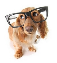νοημοσυνη σκυλου