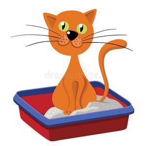 Εκπαιδευση γατας για τουαλετα- αμμος για γατες