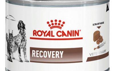 RCV1 ROYAL CANIN RECOVERY ΓΑΤΑΣ ΤΡΟΦΗ ΚΟΝΣΕΡΒΑ ΚΛΙΝΙΚΗ ΔΙΑΙΤΑ ΣΚΥΛΩΝ ΓΙΑ ΑΝΑΡΡΩΣΗ