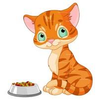 ταιστρα για γατες & η αυτοματη ταιστρα γατας